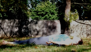 Savasana with blanket under the lower back and wrists
